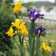 楽しみな 庭作り