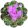 最近の庭の花