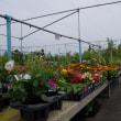 花園農産物直売所