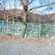 いしのまき 海ぼたる 宮城県女川町 冬のごほうび21
