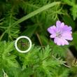 美ヶ原高原の花に虫