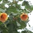 公園の花々!