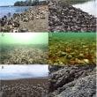 オーストラリアの貝礁、事実上すべて消滅。