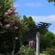 琵琶湖 水生植物園