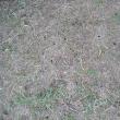 畑、蝉の抜け殻