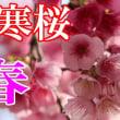 いつの間にか桜が満開になってた^^