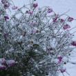 初雪が降る日に