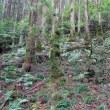 屋久島 その5 (縄文杉へ。その1)