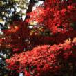171105赤城自然園 奇跡のモミジ紅葉