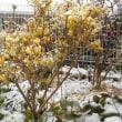 春分の日に雪