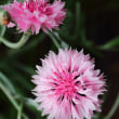 庭の花 (ちょっと前のpart-2)
