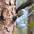 縮景園でイソシギ、おおの自然観察の森でアオジです