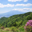 ミツバツツジと新緑と富士山~三ツ峠登山(2018)④