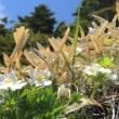 また石楠花の道
