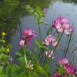 四季の森公園の春の野草