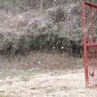 雪にもめげず4号箱わな設置