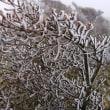 初冬の剣山~(^-^)/