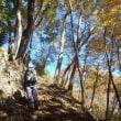 奥多摩、紅葉狩りの第二弾は急登&急下降の本仁田山でした