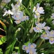 【京都御苑】「春の自然教室」開催のお知らせ(2018年4月22日)