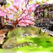 神田川の早咲きの桜