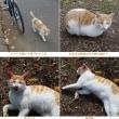 人見知りしない猫