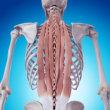 脊柱起立筋の緩め方    金沢市  ぎっくり腰   整体  腰痛