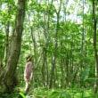 森の中のピアノ曲