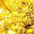 黄色い風景