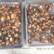 サトイモを3株収穫