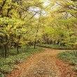 香る秋 Fragrant autumn