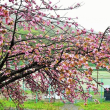 総合グラウンドの花々と地区要望箇所現地調査
