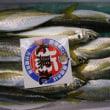2010年7月10日(土) 本日の入荷(鮮魚)