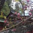 桜吹雪、つづく。