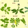▽【七草がゆ】・・・・地方・地域によって調理方法・思いに相違!