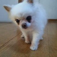 愛犬ノソノソ