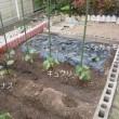 九想庵の野菜たち