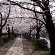 京都旅行記その18~哲学の道編
