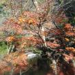 初冬の鎌倉;永福寺跡・獅子舞・法華堂跡・鶴岡八幡宮周遊