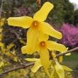 春本番の陽気、麗らかな貴重な晴天