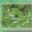 『 古里に飽くこともなく草の花 』物真似575秋qq2605