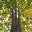 ★秋の森の足元は地味だった 2017