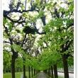ヨーロッパ木組みの家巡り27ドイツ・アウグストゥブルグ宮殿