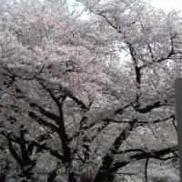 名古屋城&SW展