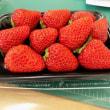 Bunkaenの苺
