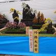 国華園の菊トピアリー