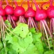 梅雨間(ま)晴れ 野菜畑に 緑風 (菜人)