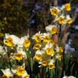 春の足音が
