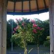 百日紅の花を、枝を短くして花を咲かせる方法、こぶを作らない方法