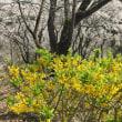 多摩森林科学園で🌸お花見