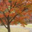 花の丘公園の紅葉